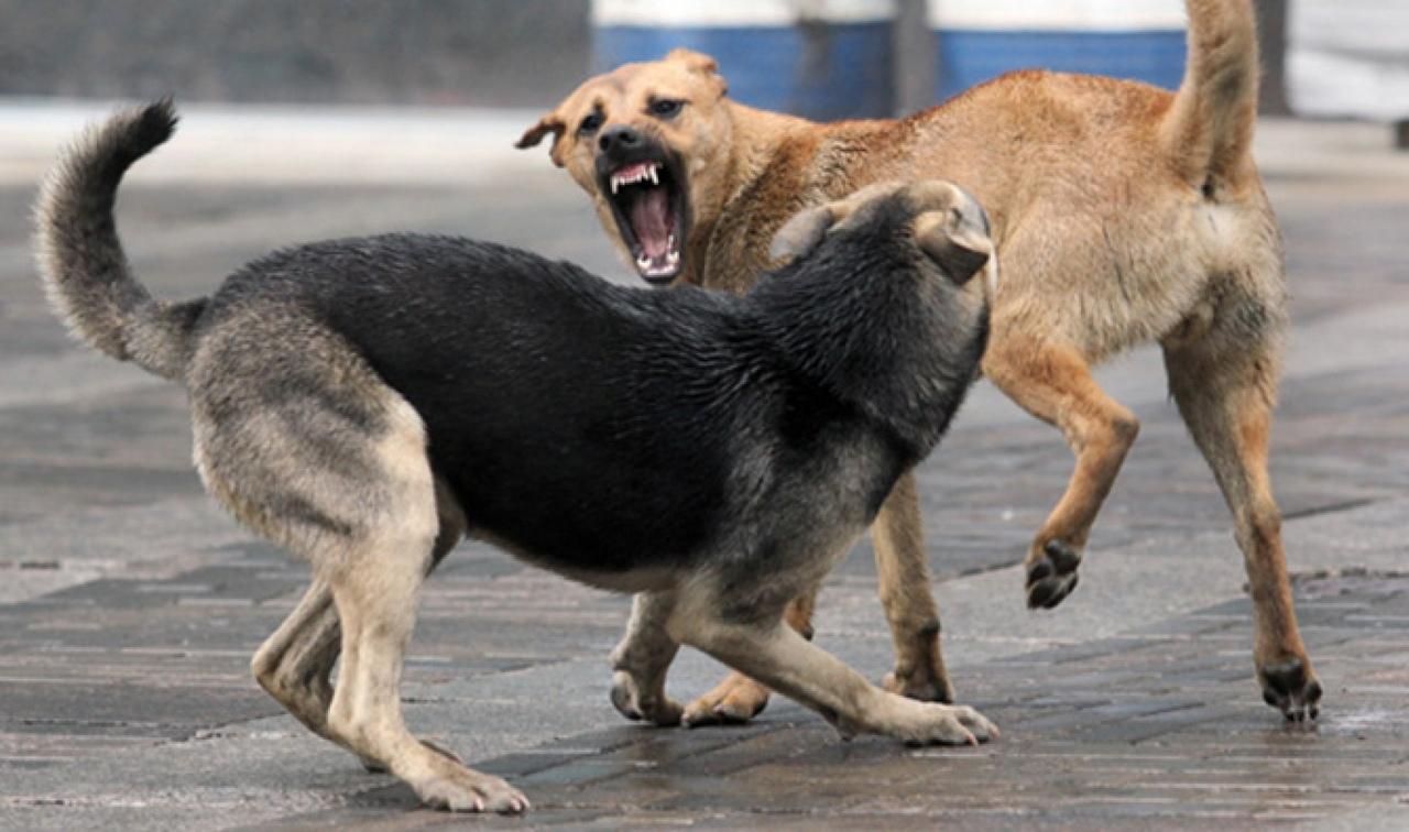 13 марта в Козельске будет проводиться отлов безнадзорных и агрессивных собак