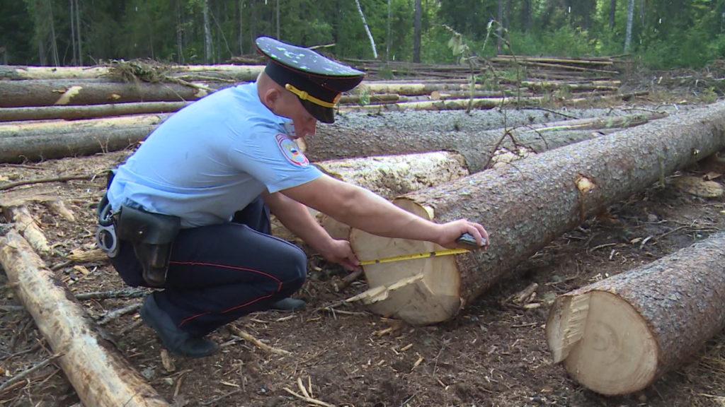 В Козельском районе по факту незаконной рубки лесных насаждений возбуждено уголовное дело