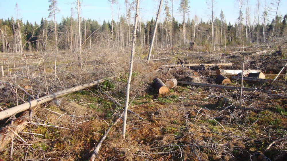 В Козельске заготовщик леса попался на даче взятки лесничему