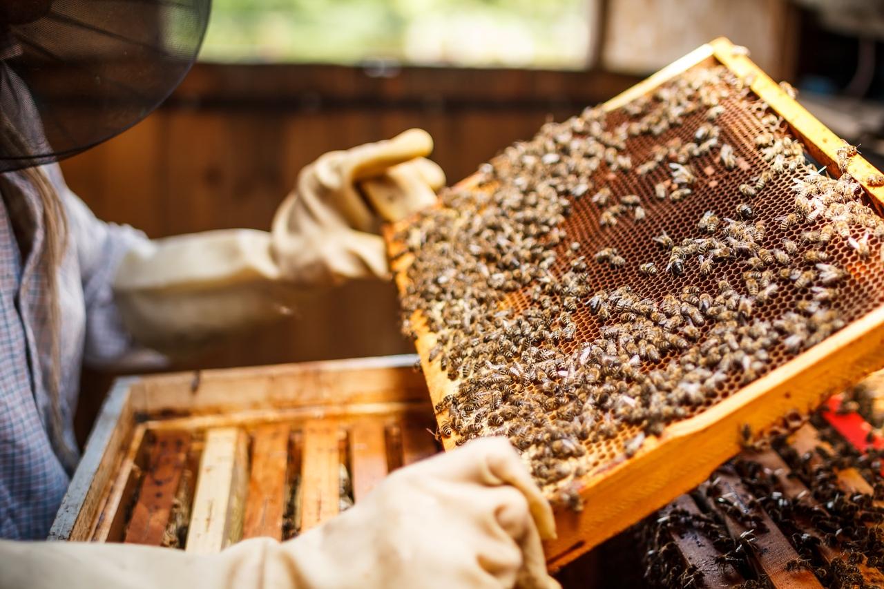 Фермеры смогут в интернете оповещать пчеловодов о месте и времени использования химикатов