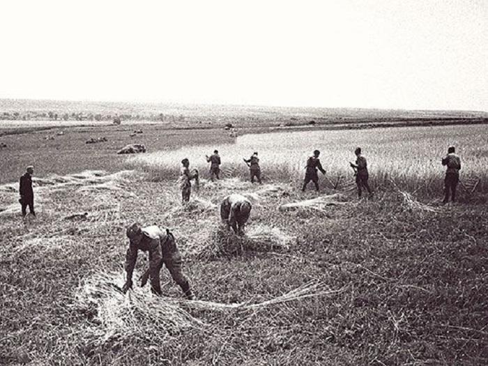 Горячее лето  42-го, или Как собирали урожай в прифронтовой полосе.   Журналист Валерий Потапов нашел новый уникальный документ