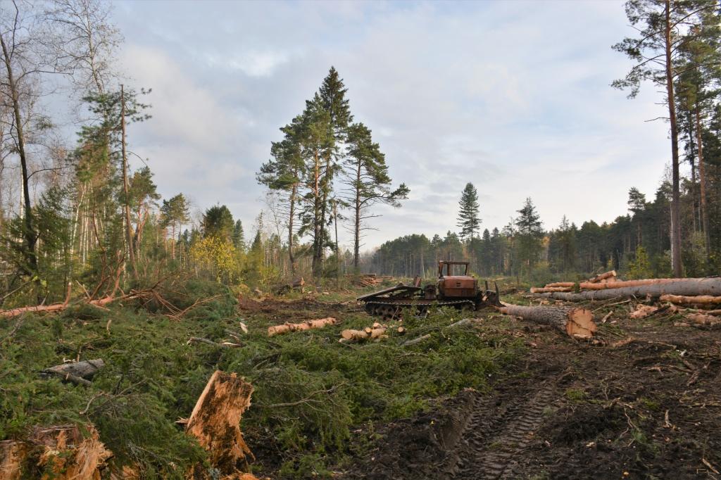 В Козельске лесничий и заготовщик леса оштрафованы в сумме на 800 тыс. рублей