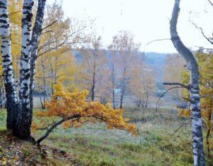 """Новая рубрика """"Вокруг Козельска"""".                                                                    Путешествуем по району с  Борисом Сергеевым.   Каньон реки Серены"""