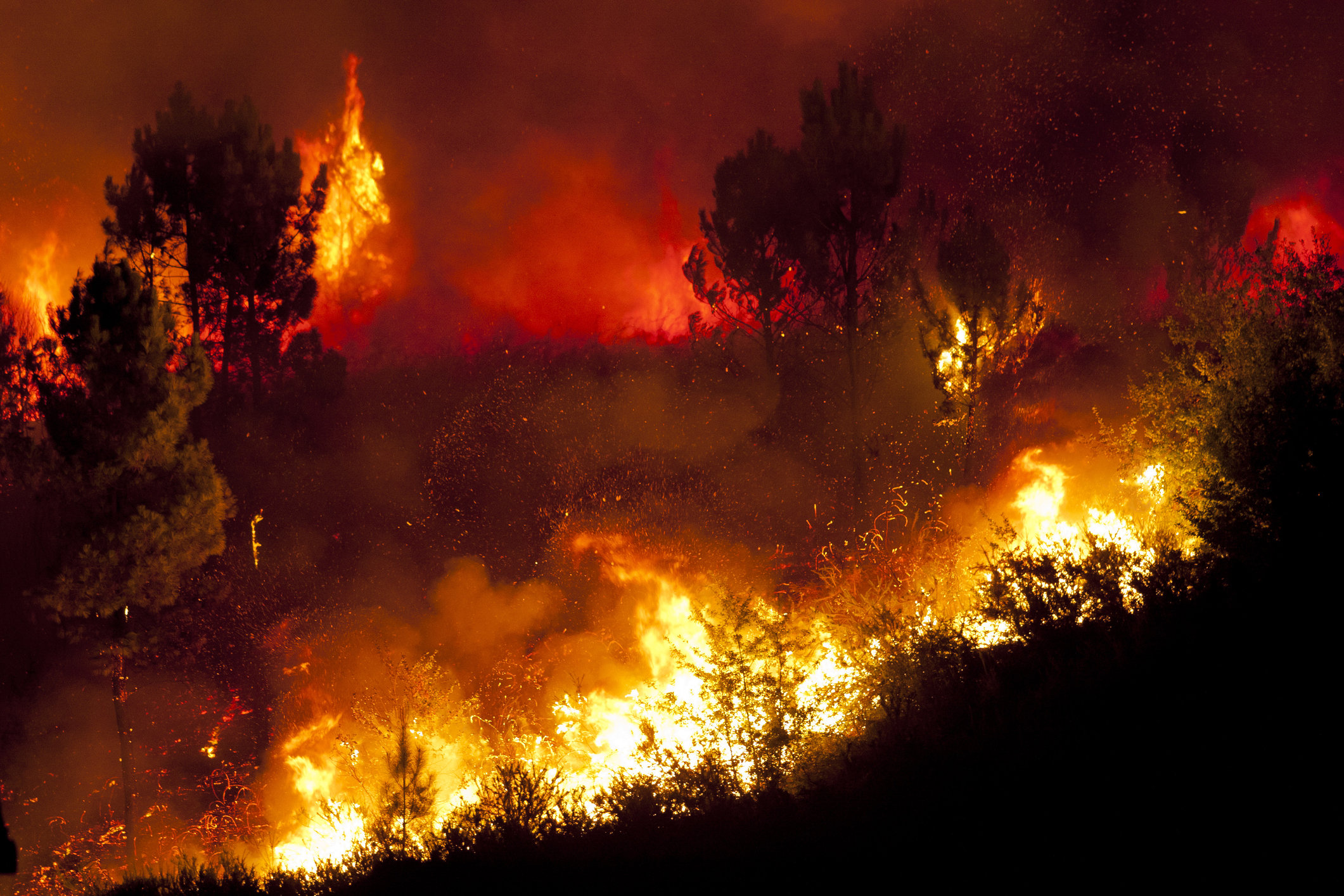 Козельскому лесничеству пока удается беречь лес от пожаров